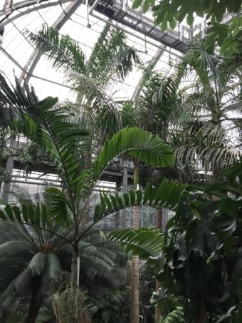 Abotanical garden15