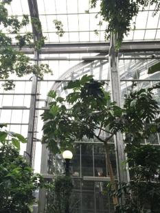 Abotanical garden2
